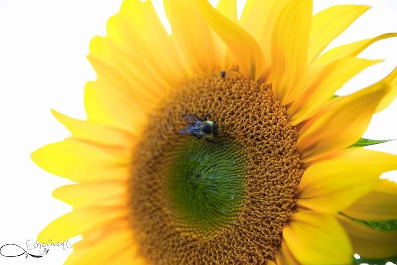Sun benefits