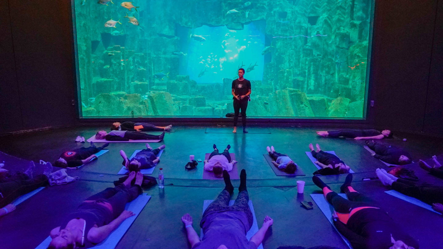Un cours de yoga à l'aquarium de Paris !